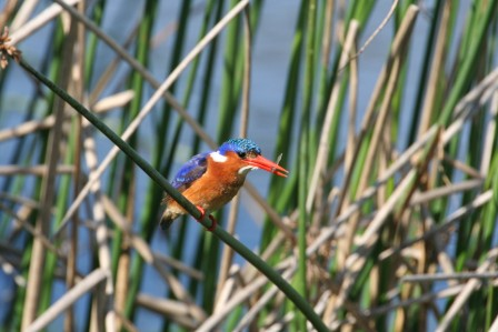 aves-birding-west-coast-tour--safari--adventure