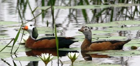 aves-kzn-birding-tour--safari--adventure
