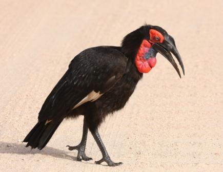 aves-north-east-birding-tour--safari--adventure