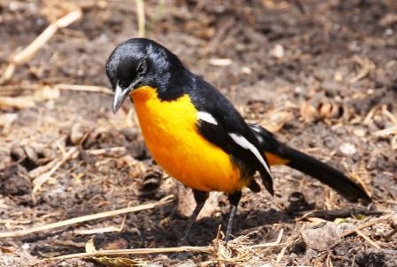 aves-north-west-birding-tour--safari--adventure